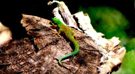 En resa till Madagaskar är alltid spännande